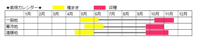 落花生の栽培時期カレンダー