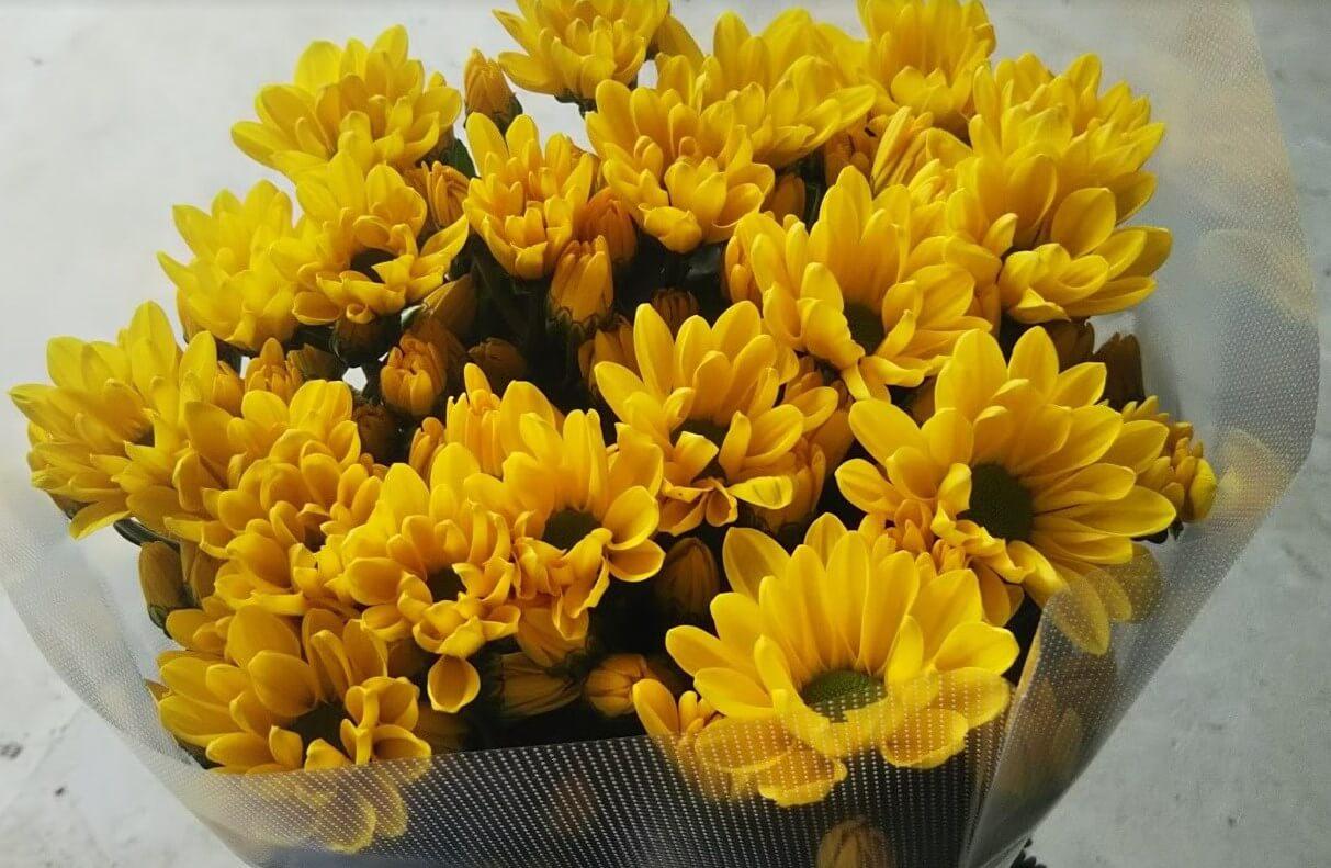 黄色いスプレー菊