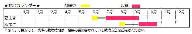 キュウリ(夏まき・秋まき)栽培時期カレンダー